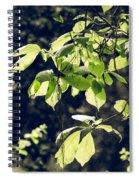 Green Mood 2 Spiral Notebook