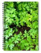 Green Parsley 2 Spiral Notebook