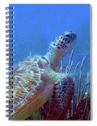 Green Sea Turtle 3 Spiral Notebook