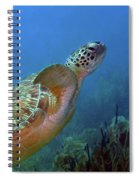 Green Sea Turtle 4 Spiral Notebook