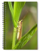 Green Slantfaced Grasshopper Spiral Notebook