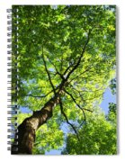 Summer Tree Canopy Spiral Notebook