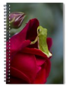 Green Tree Frog And Red Roses Spiral Notebook