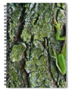 Green Tree Frog On Lichen Covered Bark Spiral Notebook