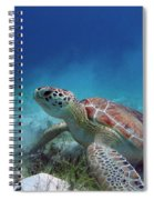 Green Turtle Spiral Notebook