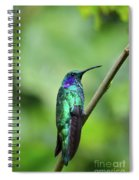 Green Violet Ear Hummingbird Spiral Notebook