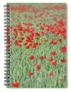 Green Wheat And Red Poppy Flowers Field Spiral Notebook