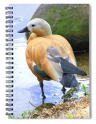 Green Winged Wood Duck 1 Spiral Notebook