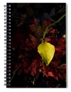 Greenbriar Leaf In Evening Sun Spiral Notebook