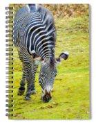 Grevys Zebra Left Spiral Notebook