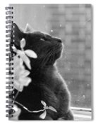 Grey Cat, Looking Up Spiral Notebook