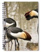 Grey Crowned Crain Of Africa 5 Spiral Notebook
