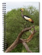 Grey Crowned Crane Spiral Notebook
