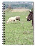 Grey Foal On Pasture Farm Scene Spiral Notebook