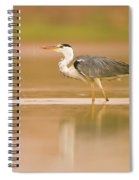Grey Heron Ardea Cinerea Spiral Notebook