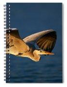 Grey Heron In Flight Spiral Notebook