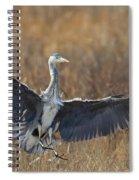 Grey Heron Landing Spiral Notebook