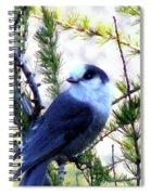 Grey Jay In A Juniper Tree Spiral Notebook