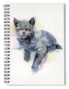 Grey Kitten Spiral Notebook