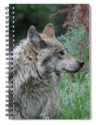 Grey Wolf Profile 2 Spiral Notebook