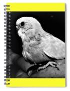 Greyscale Parraket Baby Sitting On Hand Spiral Notebook