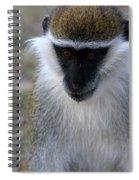 Grivet Monkey Spiral Notebook
