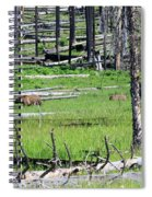Grizzly Bear And Cub Cross An Area Of Regenerating Forest Fire Spiral Notebook