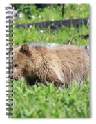 Grizzly Bear Cub In Yellowstone National Park Spiral Notebook