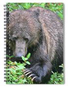 Grizzly Claws Spiral Notebook