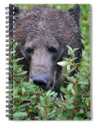 Grizzly In The Berry Bushes Spiral Notebook