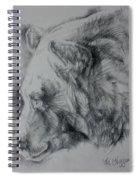 Grizzly Sketch Spiral Notebook