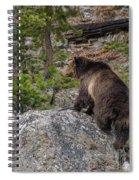 Grizzly Sow In Yellowstone Park Spiral Notebook