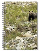 Grizzly Watching People Watching Grizzly No. 3 Spiral Notebook