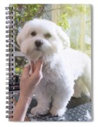 Grooming The Neck Of Adorable White Dog Spiral Notebook