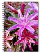 Ground Stars Spiral Notebook