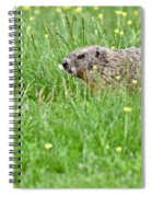 Groundhog In A Field Of Flowers Spiral Notebook