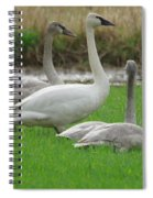 Group Of Young Swans Spiral Notebook