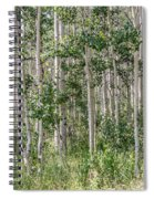Grove Of Quaking Aspen Aka Quakies Spiral Notebook