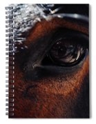 Guadalupe Mountains National Park Mule Spiral Notebook