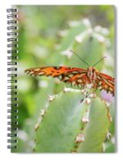 Gulf Fritillary On Cactus  Spiral Notebook
