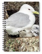 Gull Adult And Chick On Cliff Spiral Notebook