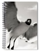 Gull In Flight 2 Spiral Notebook