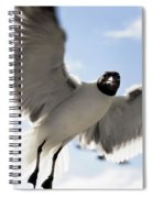 Gull In Flight Spiral Notebook