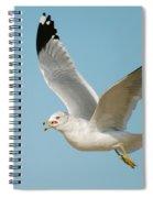Gull Spiral Notebook