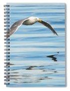 Gull Mirrored Spiral Notebook