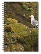 Gull On Cliff Edge Spiral Notebook