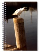 Gull Warning Spiral Notebook