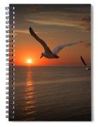 Gulls Flying Towards The Sun Spiral Notebook