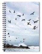 Gulls Of Carmel Spiral Notebook