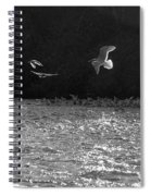 Gulls On The River Spiral Notebook